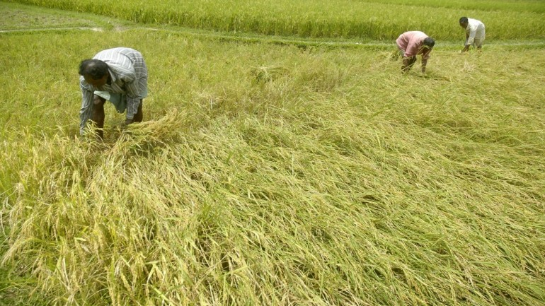 MP Govt sets up Agriculture Commission to Ensure Better Prices