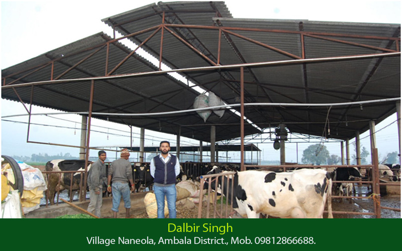 dairy farming in india Best dairy farming training centre & institute in india learn dairy farming business plan & farming courses in dairy training program call us at 91 9828964111.