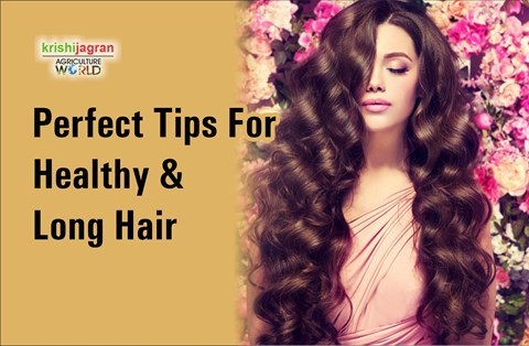 How to Control Hair Fall In Winters? Complete Healthy Hair Care Diet & Tips Here