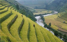 Reviving traditional crops, Nagaland adopting climate change adaptation strategy